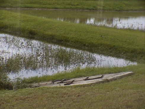 Look at the Grass between the two ponds!  ANOTHER ONE!!!
